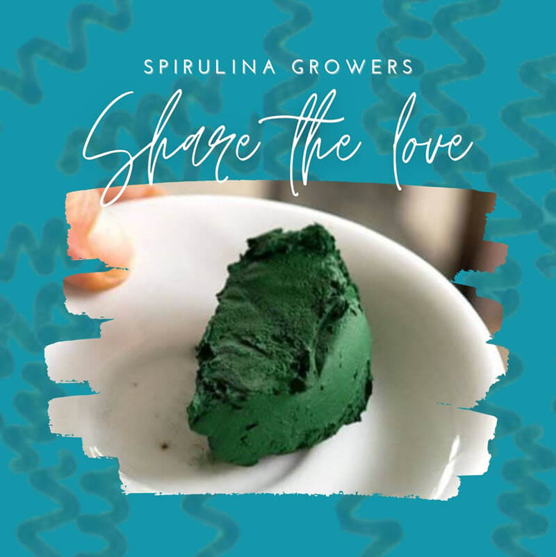 Share Live Spirulina Culture with Growers in Your Area