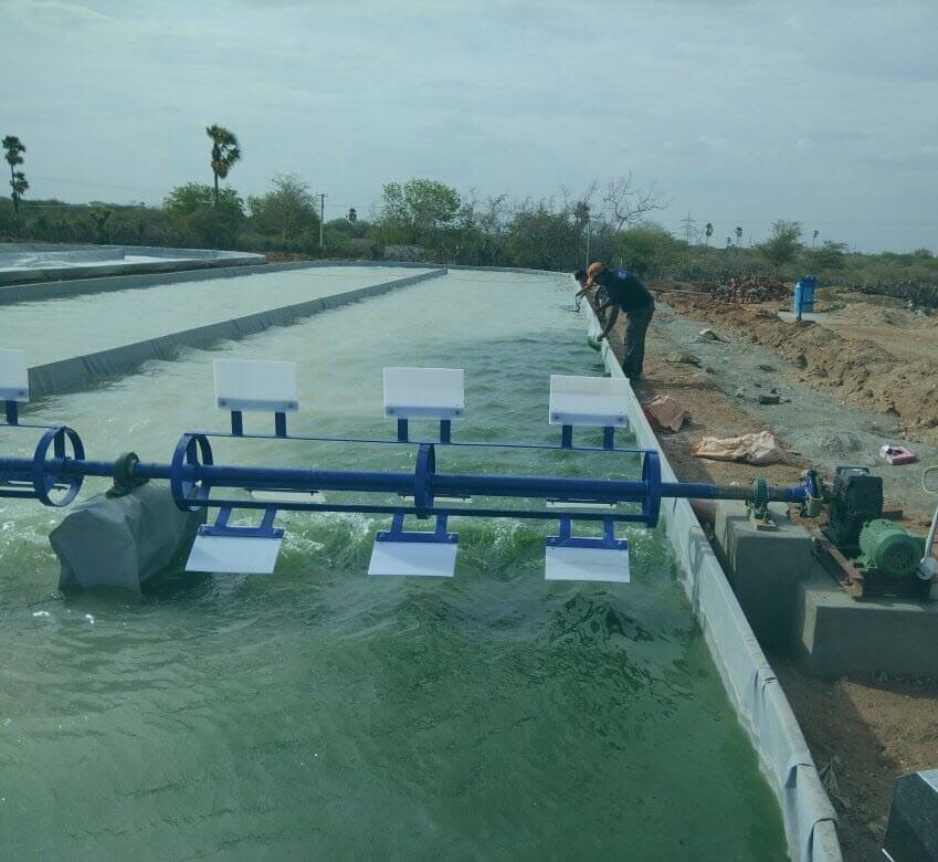 Spirulina paddle wheel aerator