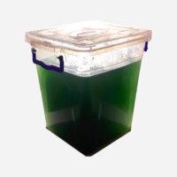 Live Spirulina Algae Seed Culture 450ml/15oz. - Ships Internationally