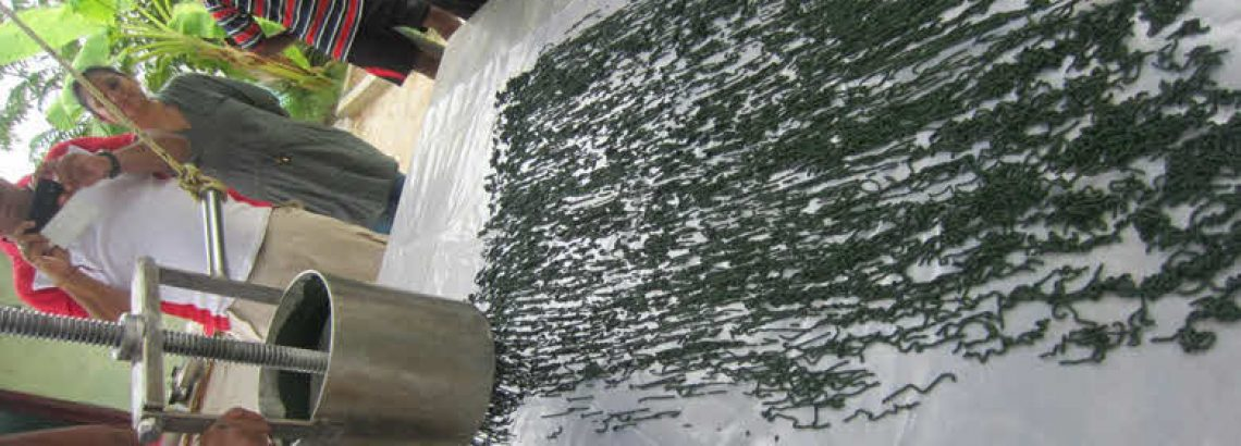 The Complete Guide to Harvesting Spirulina