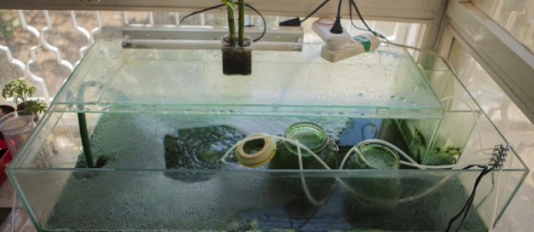 This is How Home Grown Spirulina Can Save our Planet
