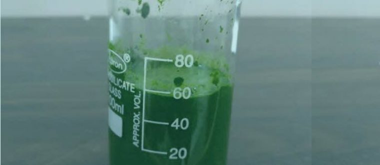 10 Scientifically Proven Reasons Why YOU Should Take Spirulina Every Day!
